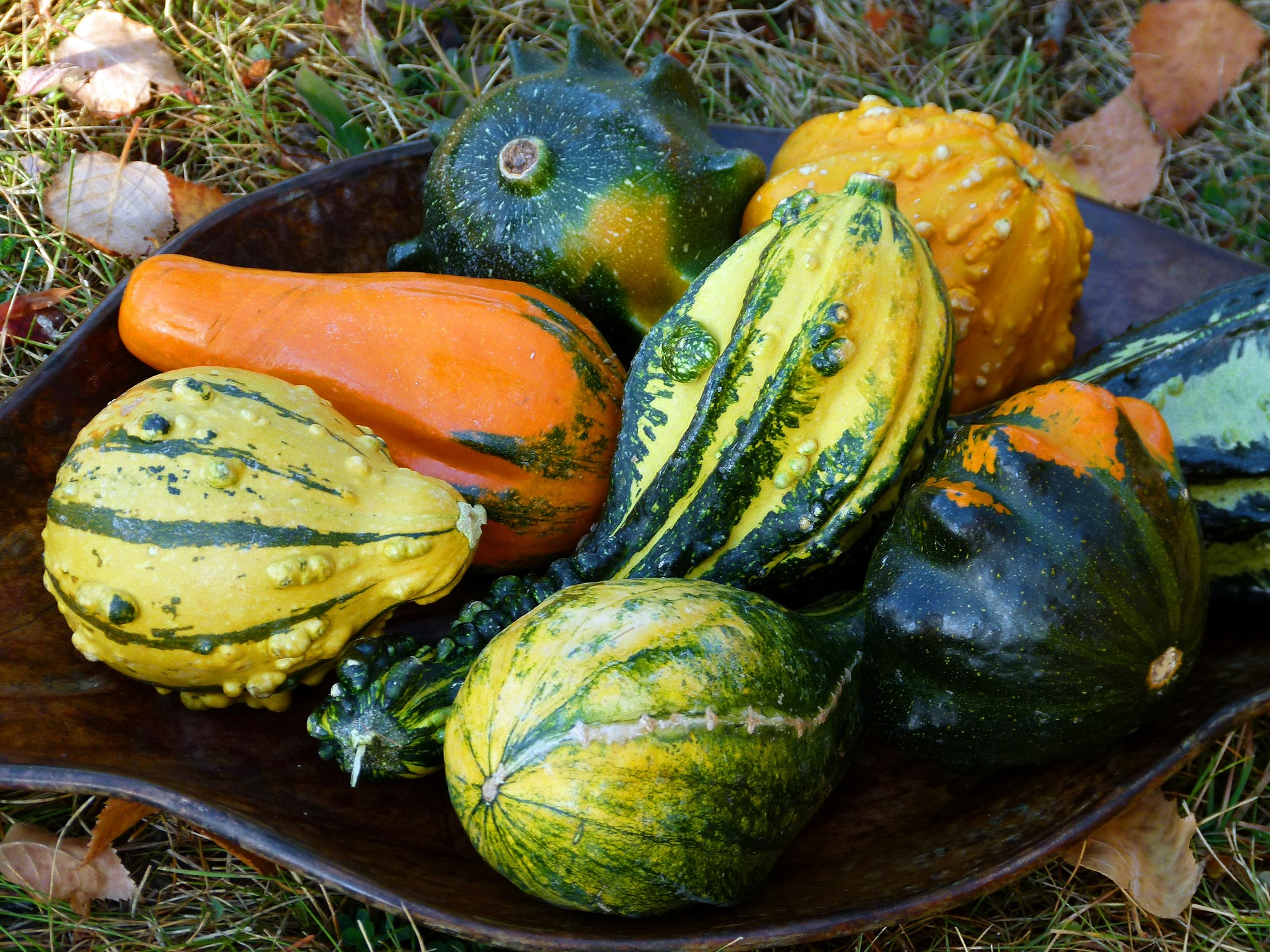 Food handler classes the amazing squash online training service offers a family of online courseware to meet your certification training needs if you are looking for an online food handler xflitez Gallery